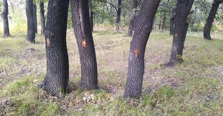 Власти Волгоградской области хотят узаконить вырубку дубов в Волго-Ахтубинской пойме  ради трассы